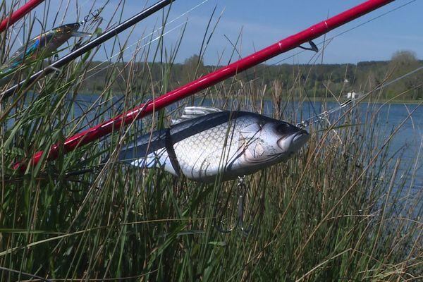 Pêche au vif ou au leurre ?