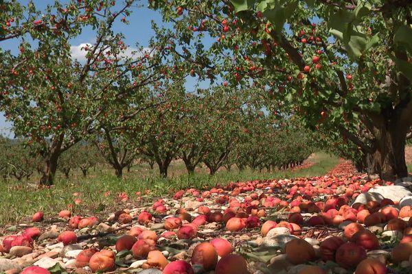 Samedi 15 juin, la grêle a touché des vergers du pays romanais ... pour certains arboriculteurs les pertes sont totales.