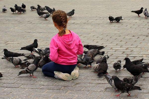 Les pigeons s'invitent dans les centres villes