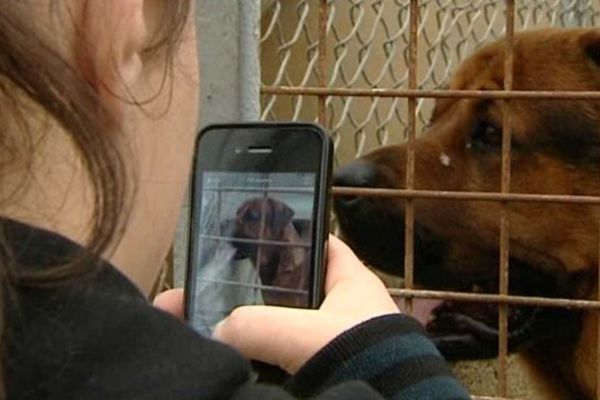 Aux journées portes ouvertes du refuge SPA de Poitiers, les visiteurs ont pu adopter un animal domestique.