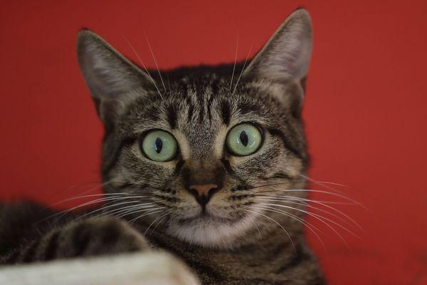 Le mystère reste à ce jour complet quant aux disparitions en série de dizaines de chats dans différents secteurs de la région toulousaine.