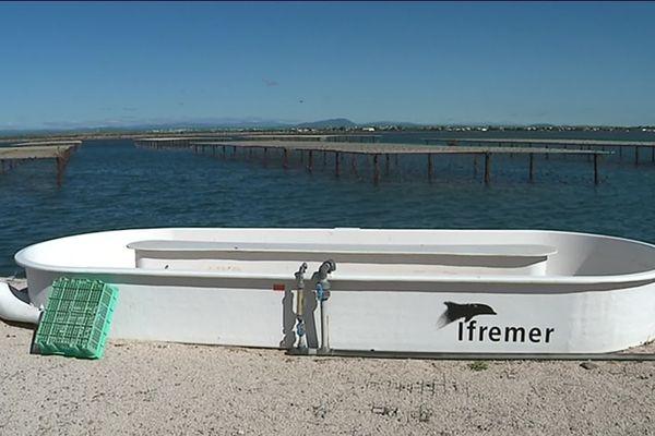 Bateau de l'Ifremer au bord de l'étang de Thau à Sète