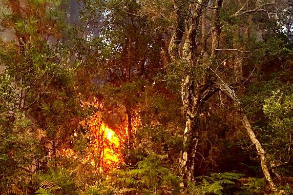 """Le feu est """"en propagation libre"""" à 19 heures ce samedi soir, """"il brûle où il veut"""" indiquent les pompiers"""
