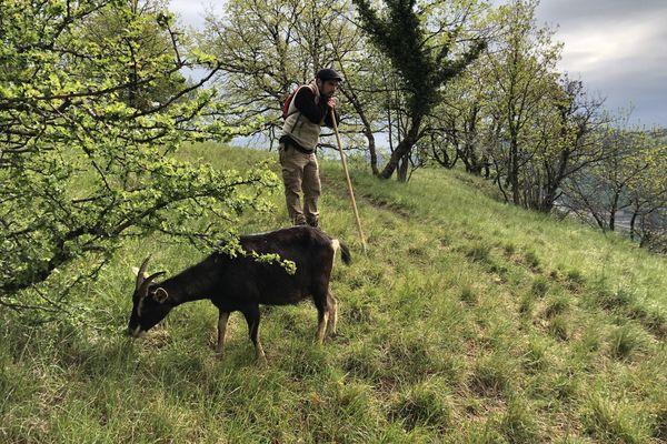 """Julien appuyé à sa houlette observe. """"Il y a beaucoup d'observation dans le métier de berger, tout ça pour anticiper les éventuels problèmes."""""""