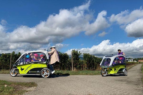 Les élèves de l'école la Dame Blanche admirent la vue sur la route des vins en route vers la cantine de Logelbach.