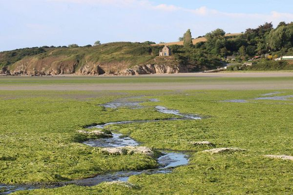 Les algues vertes avaient provoqué la fermeture de plages comme en 2017 à Hillion