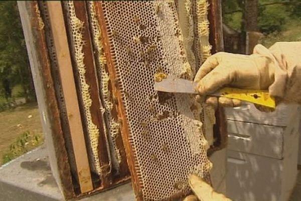 Le miel de cet été sera exceptionnel