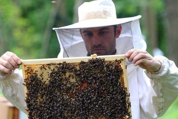 L'Ariège a été touchée par une mortalité massive des abeilles