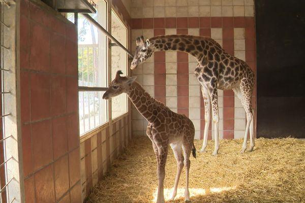 Roméo et sa Maman patientent avant le retour des beaux jours