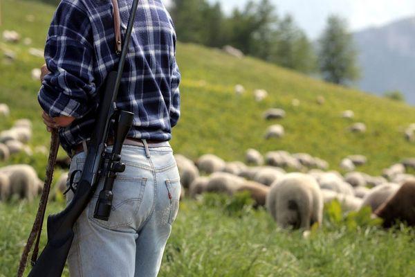 Certains bergers sont armés afin de protéger leurs troupeaux des attaques de loups