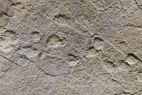 Occitanopodus, un nouveau type de trace de dinosaures révélé par les chercheurs en Lozère
