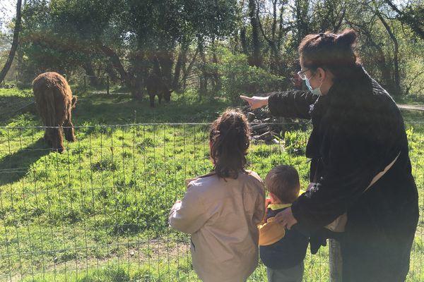 Laura et ses enfants Livia et Timéo admirent les ânes de l'Ile Forget à Saint-Sébastien-sur-Loire