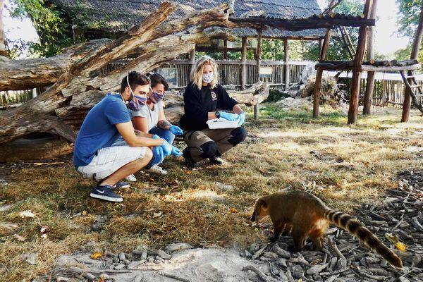 Visite privée à la Réserve Zoologique de la Haute Touche.