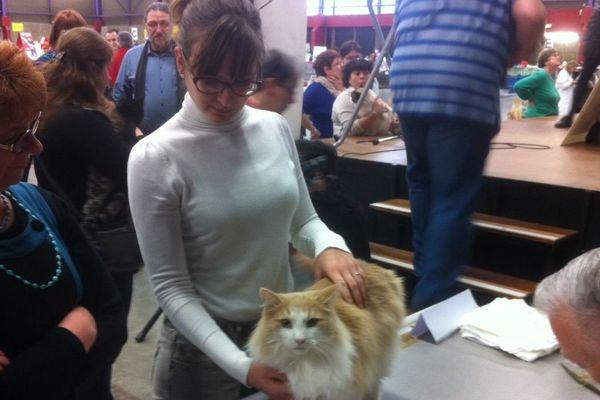 40 races de chats sont présentées lors de l'exposition ces samedi 11 et dimanche 12 janvier