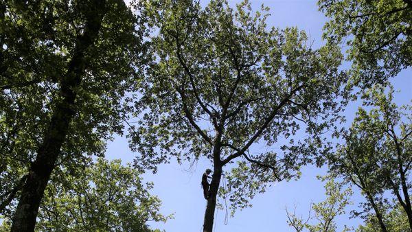 Le point de passage du câble se situe à plusieurs mètres de haut, il faut grimper à l'arbre pour assurer les système