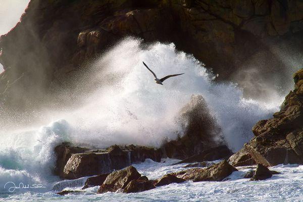 Oiseau dans la tourmente du Phare du Four - Porspoder - Finistère