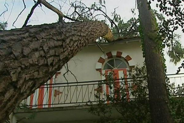 Dégâts de la tempête Martin (1999) - Charente-Maritime