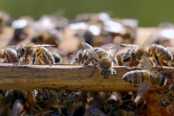 La région Provence-Alpes-Côte d'Azur est l'une des premières régions apicoles françaises