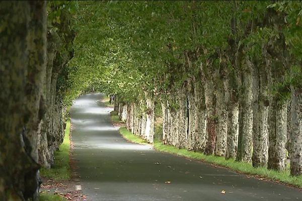 l'Allée des platanes à Sare où deux frères ont été fauchés le 10 septembre 2017.