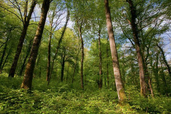 Les communes regroupent 2/3 des forêts gérées par l'ONF.