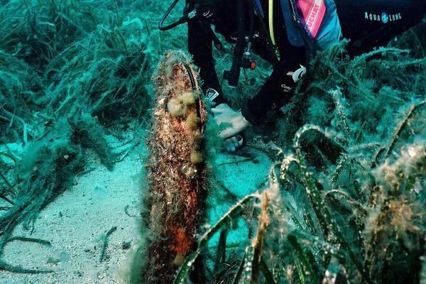 La grande nacre est une espèce endémique de la méditerranée, protégée depuis 1992.