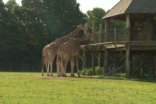 Le zoo de Cerza sous le coup d'une enquête pour trafic d'animaux : le vétérinaire répond aux accusations