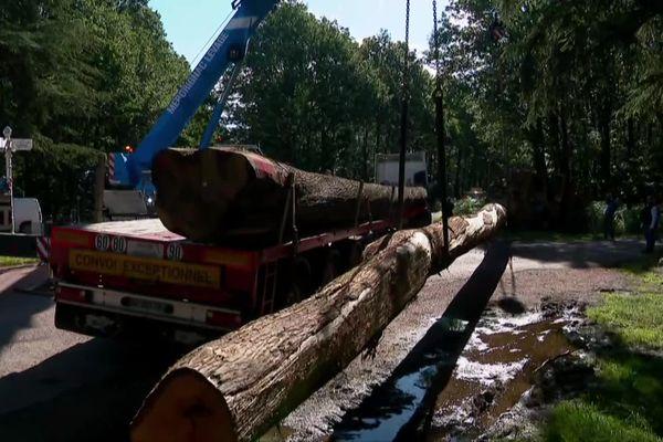 Huit chênes ont quitté la Sarthe pour une scierie en Mayenne