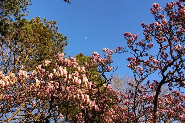 Tous les oiseaux font-ils le printemps ?