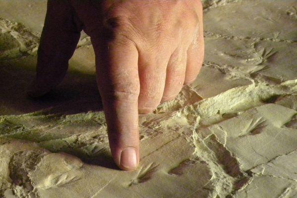 Des traces qui remontent à 150 millions d'années