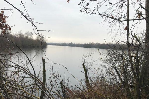 Suite à la découverte de cygnes morts à Fraimbois, une zone de contrôle temporaire a été mise en place dans onze communes du Lunévillois.