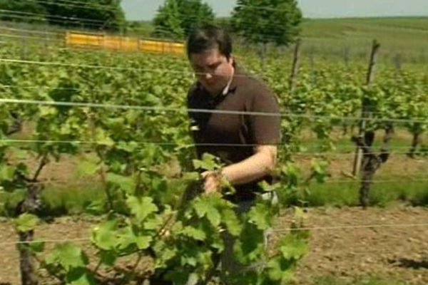 Jacques Cattin exporte ses vins à Shangaï et Pékin