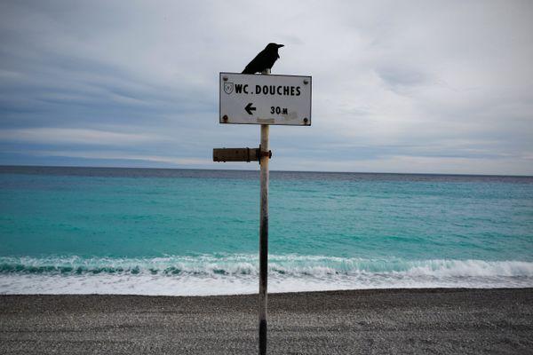 L'Université Côte d'Azur, a lancé en mars 2020, une carte interactive mondiale, afin de réencenser les phénomènes écologiques et solidaires observés pendant le confinement.