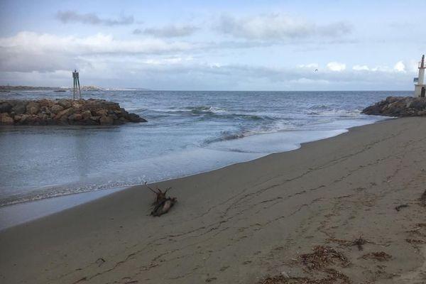 Le port du Barcarès ensablé suite à la tempête Gloria