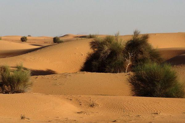L'élan de solidarité autour de Lucille gravement accidentée dans le désert aux Emirats arabes unis