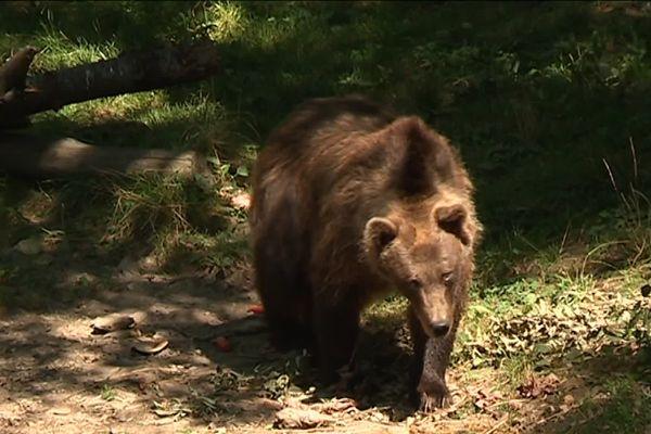 On devrait retrouver les ours du parc en juin.