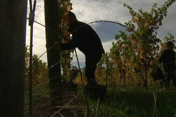 Une vingtaine de restaurateurs et de sommeliers étaient au travail de bonne heure dans les vignes du domaine des Arpents du soleil à Grisy
