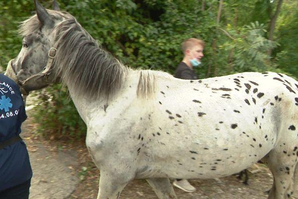 Ce cheval famélique a été conduit au Col de Vence.