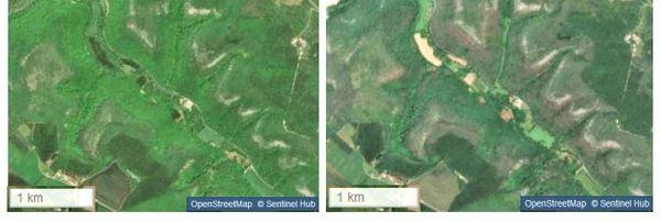 Vus depuis un satellite, des pans entiers de forêts de la réserve de Val-Suzon, colonisés par les chenilles Bombyx, ont viré du vert au gris.
