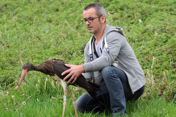 Une cigogne recueillie au Centre Athénas en Franche-Comté