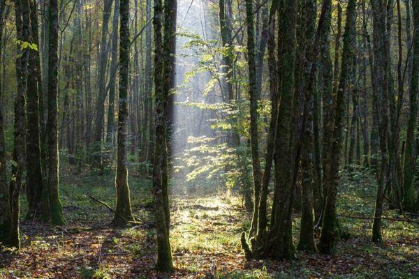 """Dans le Parc National, """"il y a de l'émerveillement partout. Des lumières, des paysages, des silences, un ciel nocturne... c'est tout un ensemble de choses""""."""