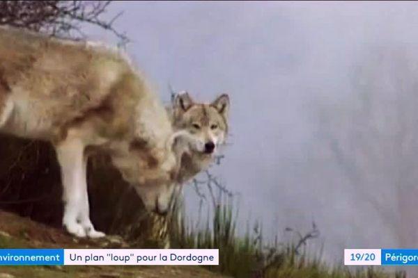 La plan loup activé en Dordogne en Février 2019