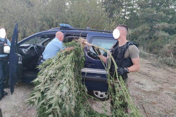 Cette découverte et la destruction de plants de cannabis à Rieux-Volvestre et Montesquieu-Volvestre, en Haute-Garonne, a eu lieu fin août. Une enquête judiciaire a permis l'arrestation de deux suspects. Ils ont écopé de 12 et 10 mois de prison avec sursis et d'amendes.