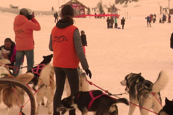 A l'Alpe-d'Huez, sans ski alpin, on organise ses vacances autrement. Avec des chiens de traîneau, par exemple.