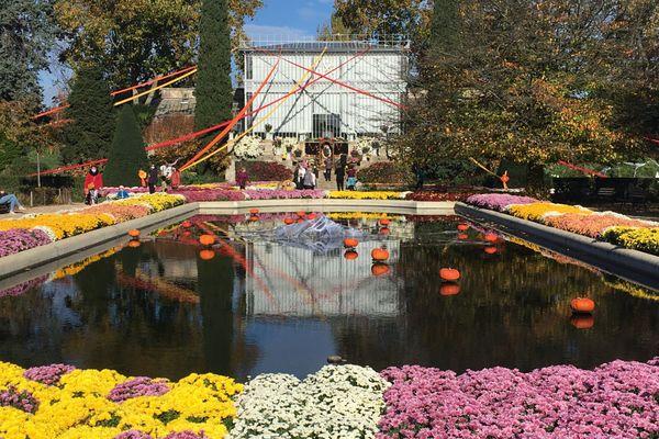 Le jardin des plantes de Rouen, rare endroit encore ouvert au public, propose sa traditionnelle exposition de chrysanthèmes, fleur phare de la Toussaint.