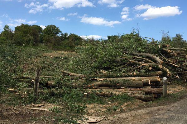 Pendant toute la journée, à Kolbsheim, les arbres ont été abattus et les troncs empilés.