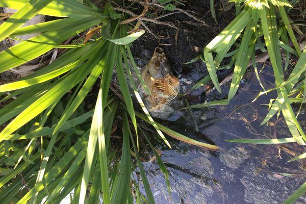L'odeur des poissons en décomposition pourrait provoquer des malaises chez les usagers du lac.