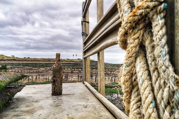 Une vendange exceptionnelle sur l'île d'Aix après huit mois de marnage.