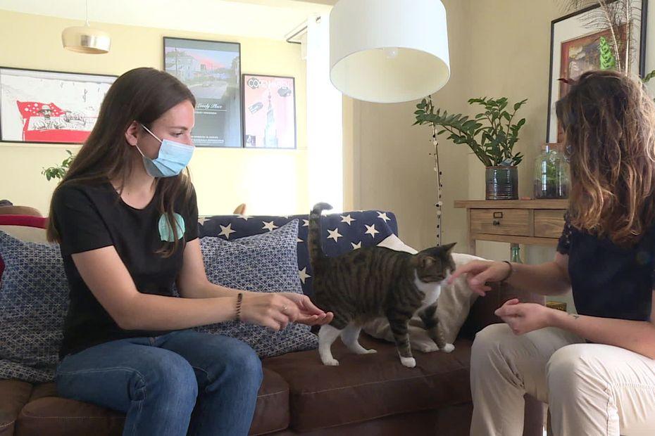 Pet-sitting : des vacances plus sereines avec la garde de chat à votre domicile