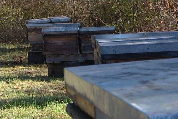 Une ruche peut donner jusqu'à 40 kilos de miel.