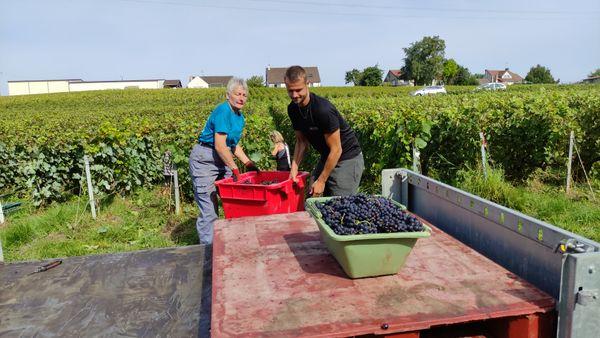 Les caisses de raisins vont partir pour la coopérative
